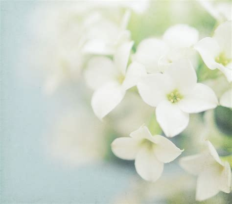 white flower images white flowers bouquet the sweetest occasion the