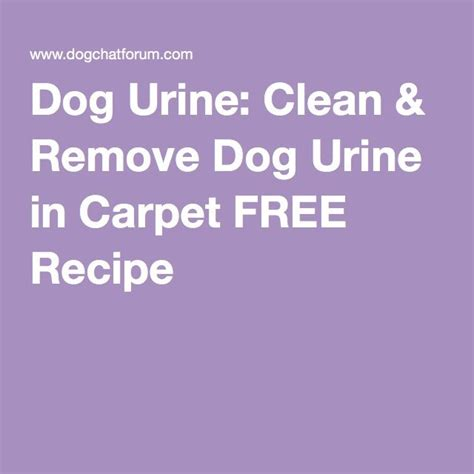 how to remove urine from rug urine clean remove urine in carpet free recipe household hints
