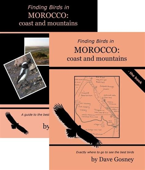 in morocco books finding birds in morocco coasts mountains dvd book pack