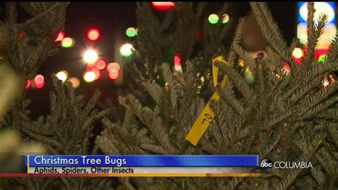 29 news bed bugs in christmas trees your tree may be home to thousands of bugs