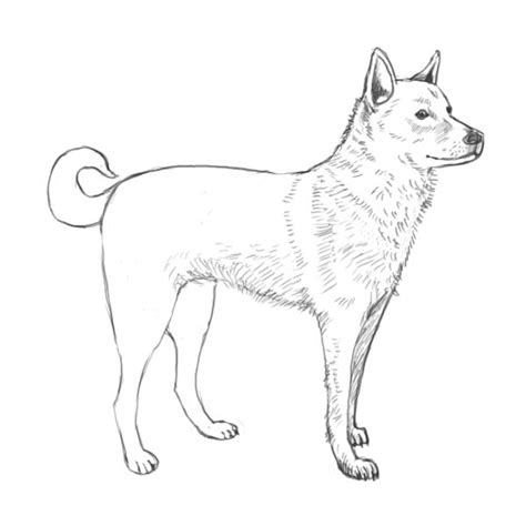 drawing dogs simple outline how to draw complete the drawing how to draw animals
