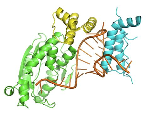2 proteins in the human file structure of the histone mrna stem loop