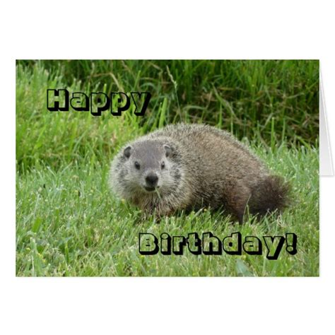 groundhog day birthday happy birthday groundhog card zazzle