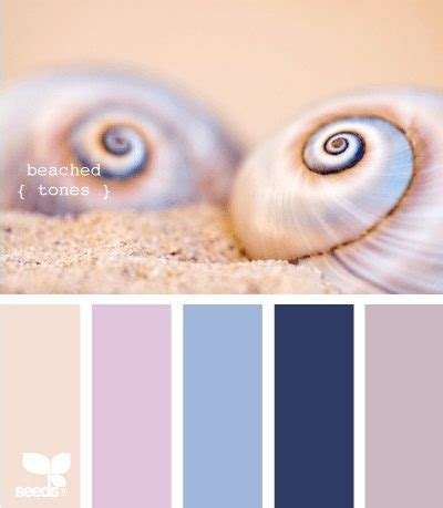seashell color color palettes from the shore bliss living