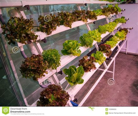 hydroponic vertical earth garden stock photography