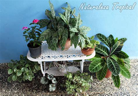 como decorar con plantas una terraza naturaleza tropical aspectos a tener en cuenta si quieres