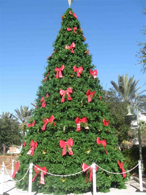 awesome picture of paddock christmas trees fabulous