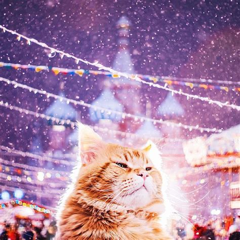 kristina makeeva 17 most beautiful photos of moscow during christmas by