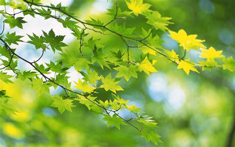Große Bäume Verpflanzen 3752 by Die 69 Besten Gr 252 Ne Hintergrundbilder