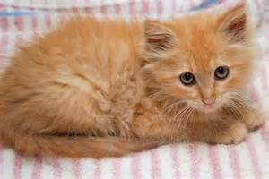 cafechoo image orange cat names
