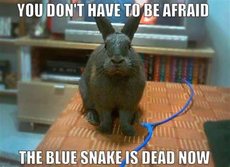 Rabbit Meme - rabbit ramblings bunny monday meme day zed s dead
