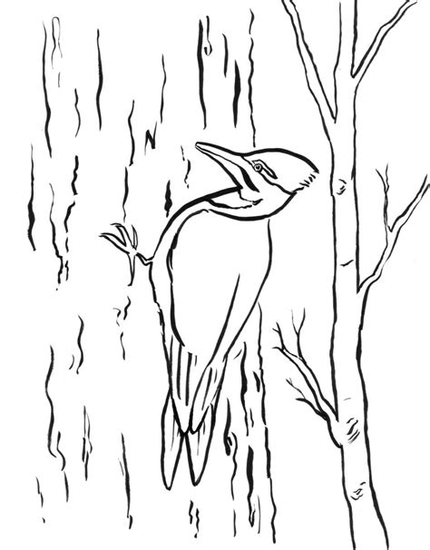 woodpecker coloring pages to print coloring pages