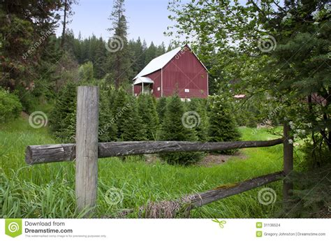 fence barn and x mas trees stock images image 31136524