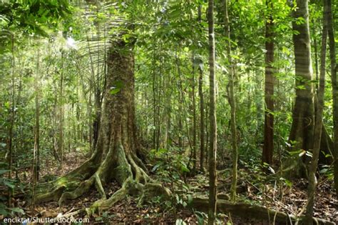 can you buy plants on amazon what is deforestation for kids information and facts