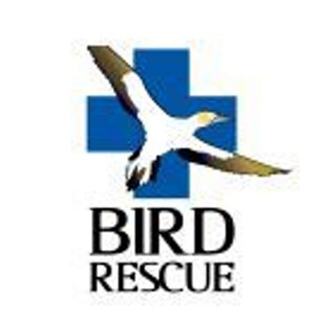 nz bird rescue nzbirdrescue twitter