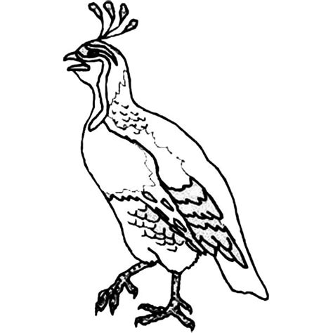 coloring pages quail from heaven bible manna and quail coloring pages