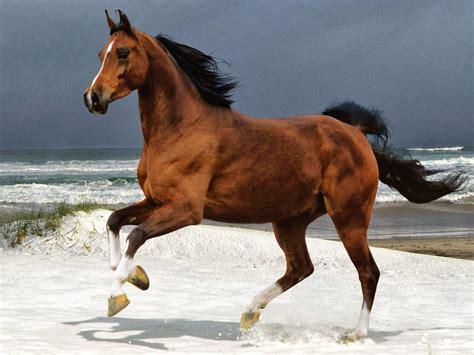 gambar 10 kumpulan gambar kuda putih coklat dan hitam keren