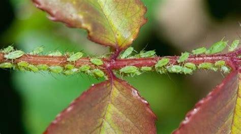 lombrichi nei vasi l insecticide naturel que tous les jardiniers devraient