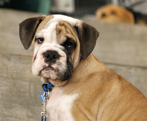 pet travel question shipping  dog   zealand
