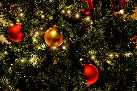 christmas holiday free images branch winter glowing home celebration