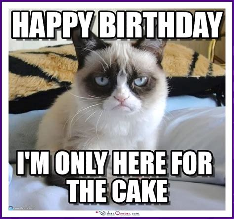 happy cat meme happy birthday memes with cats dogs and animals