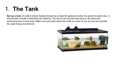 do turtles need heat ls taking care of a pet turtle