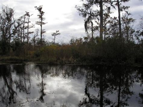 another view of the louisiana landscape gulf coast