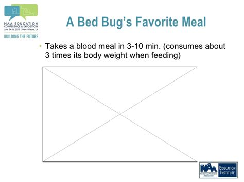 how long can bed bugs live without blood evicting bed bugs strategies to keep bed bugs off your tenant list