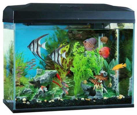 blue small aquarium designs seaview aquarium centre blue planet classic aquariums