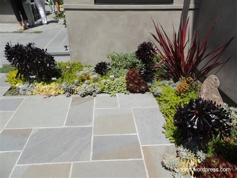 succulent garden ideas mixed succulent beds in a modern garden tended