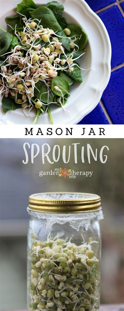 how to a jar l how to grow mung bean sprouts in a jar