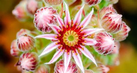 piante con fiori piante grasse con fiori piante grasse piante grasse