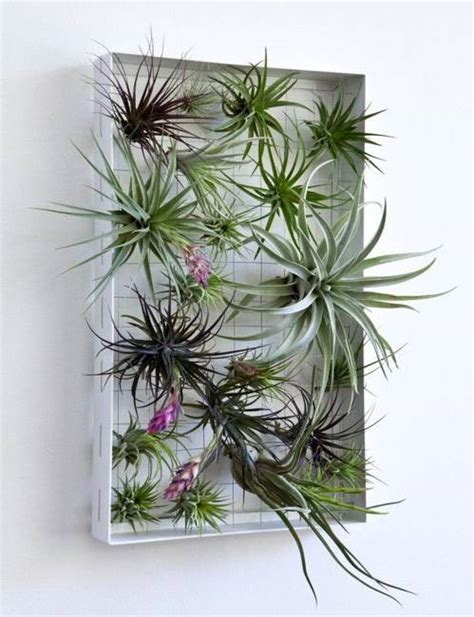 green wall decoration with air plants space saving vertical garden design ideas