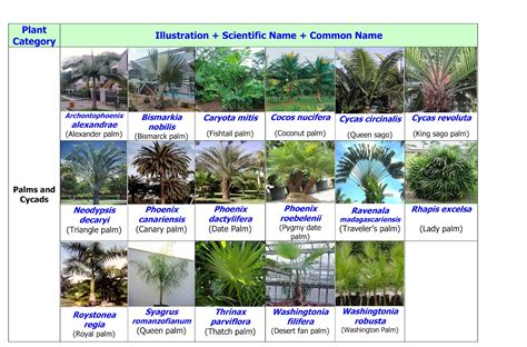 common landscaping plants landscape in uae and pakistan uae common landscape plants