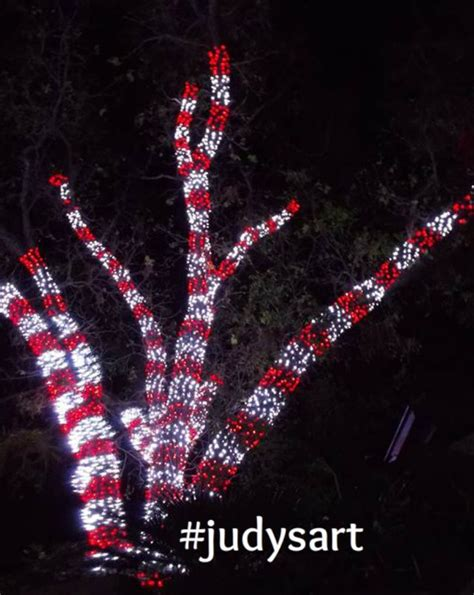 twinkling candy cane outdoor lights 25 unique outdoor trees ideas on tomatoe cage tree outdoor