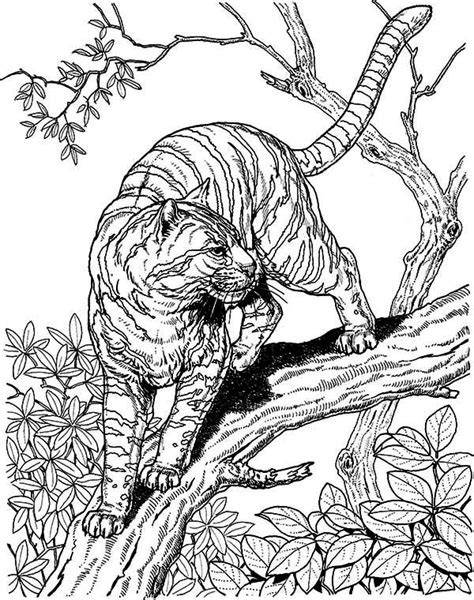 coloring pages of wild cats hard owl coloring pages tiger liked wild cat in the wild