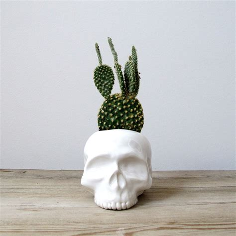 cactus planter human skull ceramic planter perfect for cactus succulent or