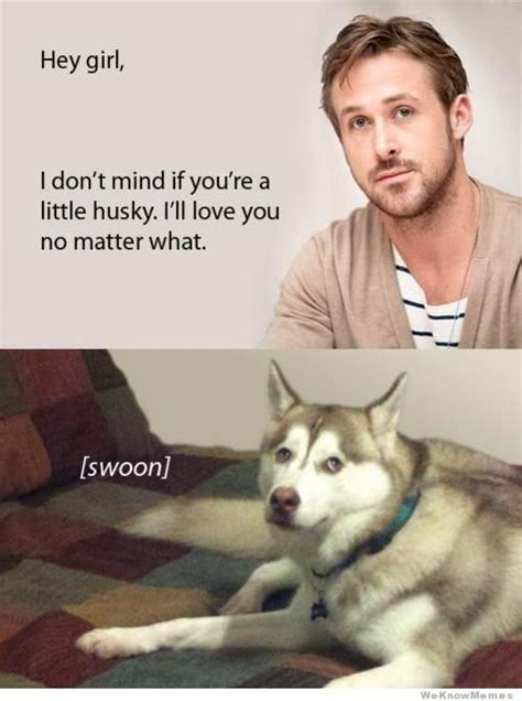 Doge Girl Meme - i don t mind that you re a little husky weknowmemes