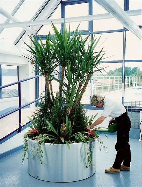 best plant for office 20 best indoor images on pinterest indoor house plants