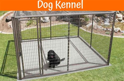indestructible kennel top best indestructible crates in 2017 us bones
