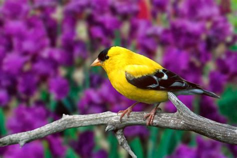 beautiful birds wallpapers free hd desktop wallpapers