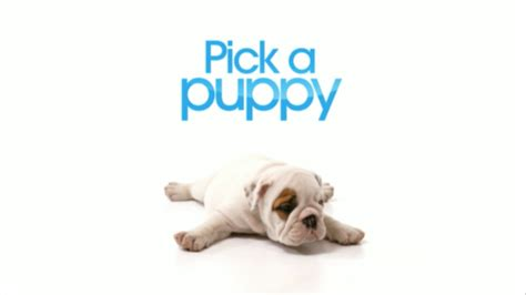 how to choose a puppy a puppy pick a puppy