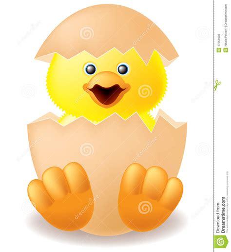 imagenes libres pollo pollo