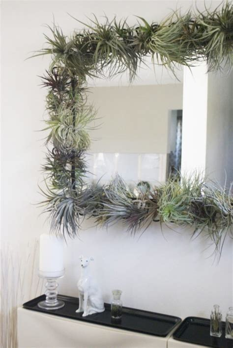 Tillandsia Houston By Fab Outlet tillandsia air plant wall mirror the decorating and