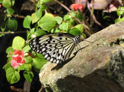Uf Butterfly Garden by Florida Museum Of History In Gainesville Florida
