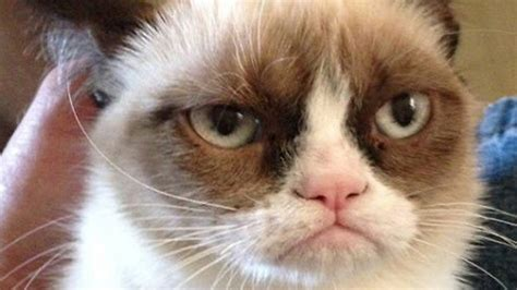 gets kitten grumpy cat gets a deal salon
