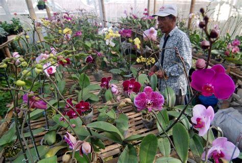 Jual Bibit Bunga Anggrek Di Jakarta penelitian baru bppt analisis senyawa 5 anggrek asli