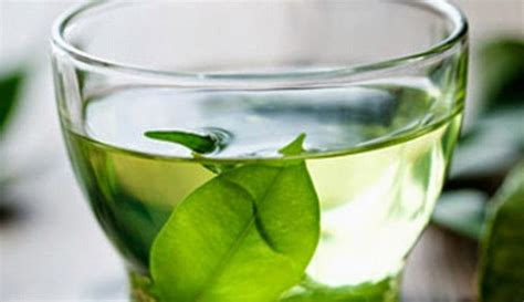 Minuman Teh Hijau teh hijau kini dikembangkan untuk memusnahkan kanker berita kesehatan terkini