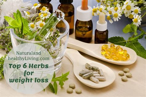 weight loss herbs top 6 herbs for weight loss and healthy living