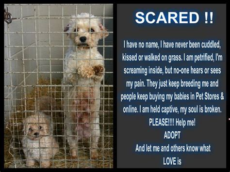 why are puppy mills bad 98 best images about puppy mills are bad on golden retriever rescue